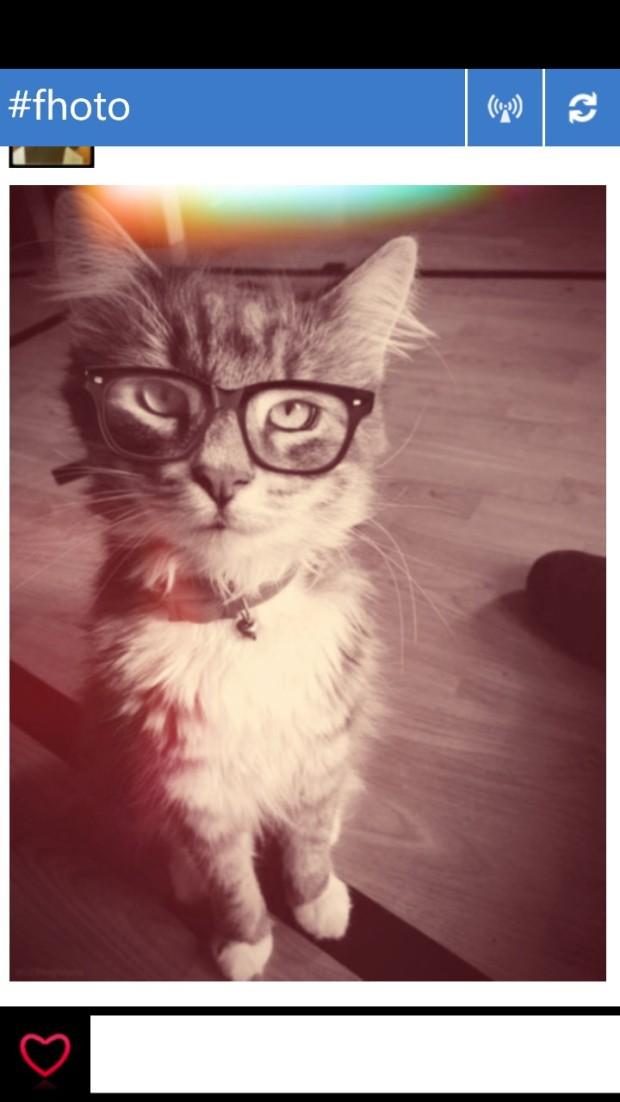 Stud Cat lol
